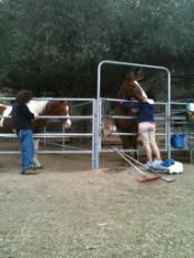 Huntington Beach Reiki at Horse rescue